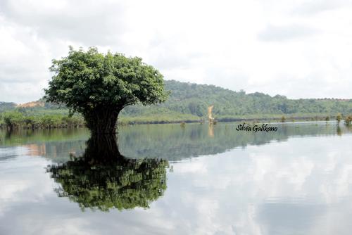 Danau Laet